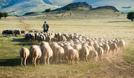 Pastor con ovejas en la Laguna de Cojup